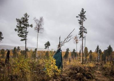 Иркутская-область-PosadiLes-осень-2017-124