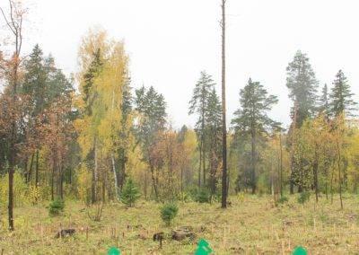 Респулика-Удмуртия-PosadiLes-осень-2017-2